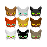 Cat face set. Head cats different color. Muzzle pet collection Royalty Free Stock Images