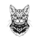 Cat face sketch vector Royalty Free Stock Photo