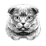 Cat face sketch vector Royalty Free Stock Photos