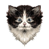 Cat face sketch vector Stock Image