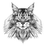 Cat face sketch vector. Cat breed Maine Coon face sketch vector black and white drawing stock illustration