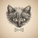 Cat face sketch Royalty Free Stock Images