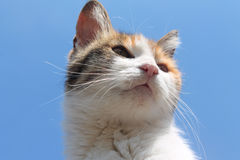 A cat face on the sky background. A cute cat face on the sky background royalty free stock images