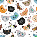 Cat face vector background with paws Stock Photos