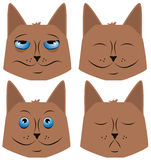 Cat Faces Royalty Free Stock Photo