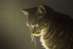 Cat faces at shadow. Cat faces at morning shadow Stock Photo