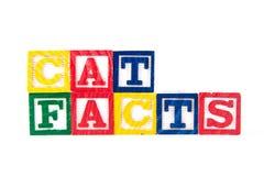 Cat Facts - bloques del bebé del alfabeto en blanco Fotografía de archivo