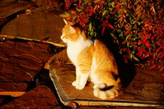 Cat with fall colors Royalty Free Stock Photo