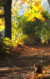 Cat in fallen leaves Royalty Free Stock Photos