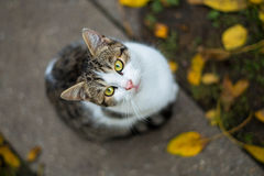 Cat with fallen leaves Stock Image