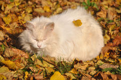 Cat in the fallen leaves Stock Image