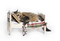 Cat Falls Asleep Reading Stockfoto