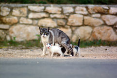 Free Cat Family Stock Images - 1360774