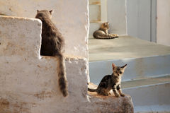 Cat family. Family of cats on Hydra island, Greece Stock Photography