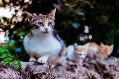 Cat Family Royalty Free Stock Photography