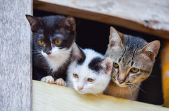 Cat family. 3 Brown White black friend cat cute in the window Stock Photography
