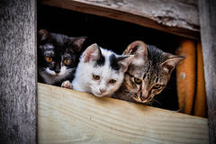 Cat family. 3 Brown White black friend cat cute in the window Royalty Free Stock Image