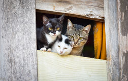 Cat family cute. Cat family friend cat cute in the window Royalty Free Stock Images