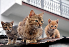 Cat family. 3 cat-like family members on a bench Royalty Free Stock Photography