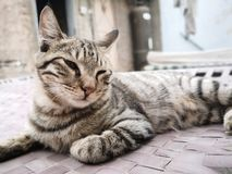 Cat family living in the home. Cat family  living in the home. colorful cats male and female stock images