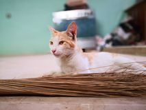 Cat family living in the home. Different type of cats living here royalty free stock images