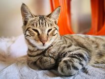 Cat family living in the home. Different type of cats living here stock image