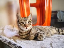 Cat family living in the home. Different type of cats living here royalty free stock photos
