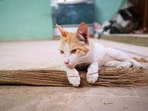 Cat family living in the home. Different type of cats living here stock photo