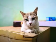 Cat family living in the home. Different type of cats living here stock images