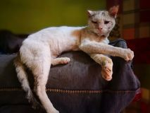 Cat family living in the home. Different types of cats living here royalty free stock images