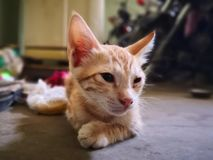 Cat family living in the home. Different types of cats living here stock photos