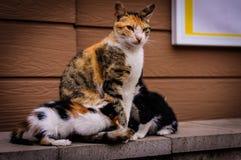 Cat Family With Mother Cat y gatitos Imagenes de archivo