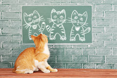 Cat family. Red cat with his family merry portrait stock photography