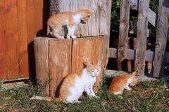 Cat family Royalty Free Stock Photo