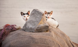 Cat family Royalty Free Stock Images