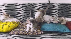 Cat family. And unlucky mouse Stock Photos