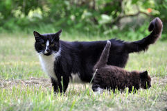 Cat family walking together on grass Royalty Free Stock Photo