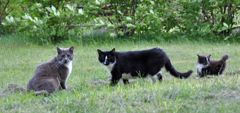 Cat family walking together on grass Stock Photo