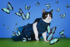 Cat in fashionable dress on a blue background isolated Stock Photography