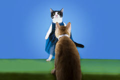 Cat in fashionable dress on a blue background isolated Royalty Free Stock Images