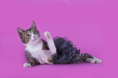 Cat in fashionable dress on a pink background isolated Royalty Free Stock Photography