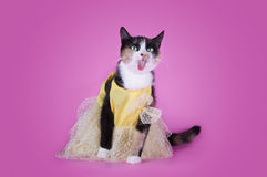 Cat in fashionable dress on a pink background isolated Stock Images