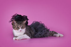 Cat in fashionable dress on a pink background isolated Royalty Free Stock Images