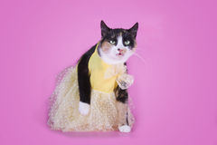 Cat in fashionable dress on a pink background isolated Royalty Free Stock Image