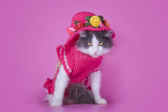 Cat in fashionable dress on a pink background isolated Stock Image