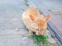 Cat Fat stock photos