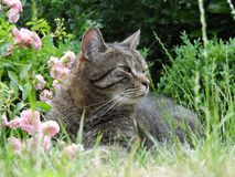 Cat, Fauna, Grass, Small To Medium Sized Cats Royalty Free Stock Photography