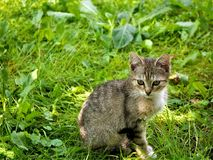 Cat, Fauna, Mammal, Grass Stock Photos