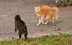 Cat, Fauna, Mammal, Small To Medium Sized Cats Royalty Free Stock Photos