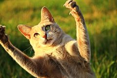 Cat, Fauna, Small To Medium Sized Cats, Cat Like Mammal Stock Image